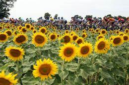 Тур де Франс в картинках (13 этап)